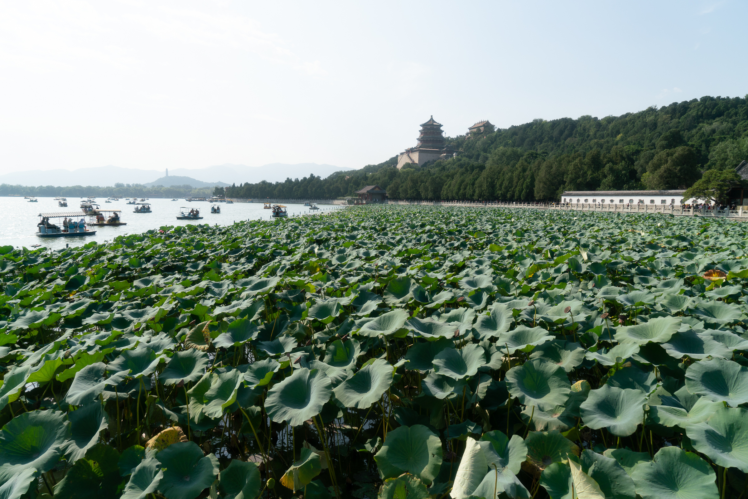 Summer Palace- Lotus Garden